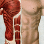 Muskelaufbau für Einsteiger