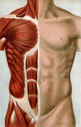 Muskeln aufbauen für Einsteiger