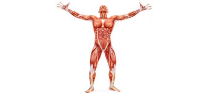 Bcaa Wirkung Und Anwendung Für Muskelaufbau Fettabbau Ausdauer
