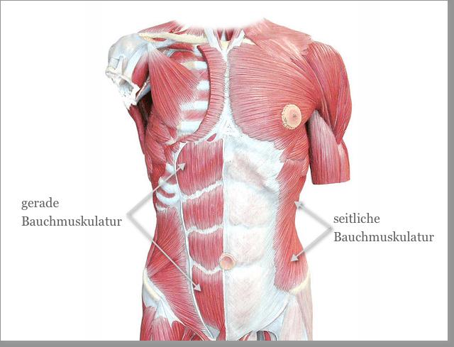 Bereiche für effektives Bauchmuskeltraining (Bauchmuskeln Grafik)