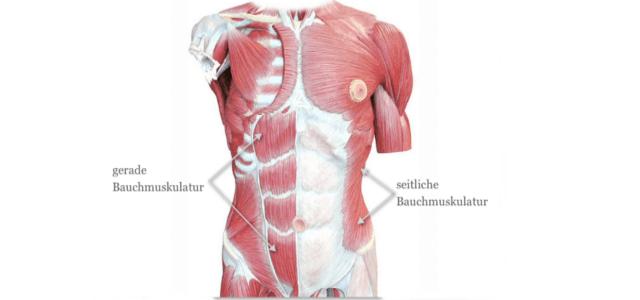 bauchmuskeltraining muskeln