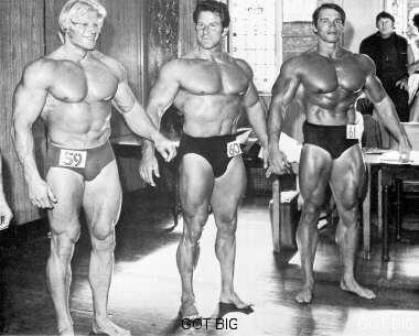 Arnold im Vergleich 2