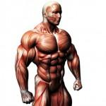Nr. #1 Tipps für Muskelwachstum