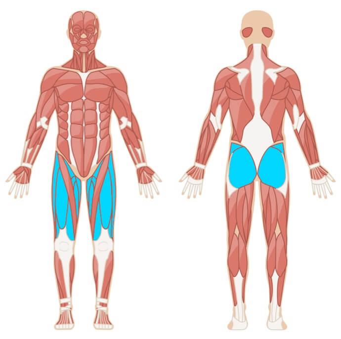Kniebeugen primäre Muskelgruppen