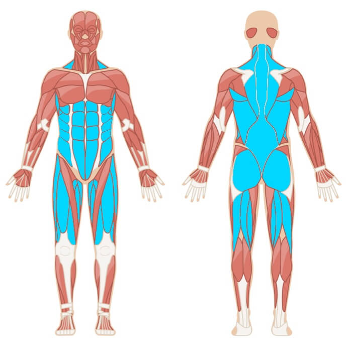 Kreuzheben Muskelgruppen