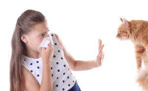 darm allergien