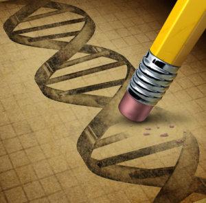 epigenetik funktion